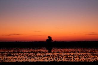 arrozales al atardecer